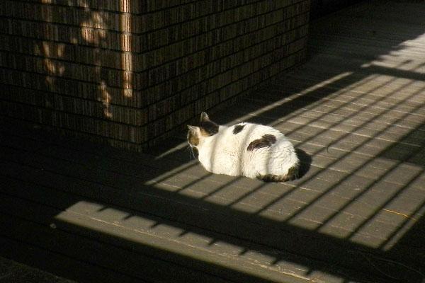 ウィンの日向ぼっこ
