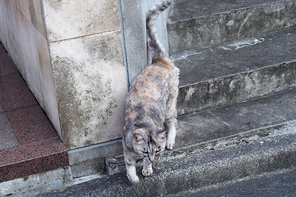 銀ちゃん階段下