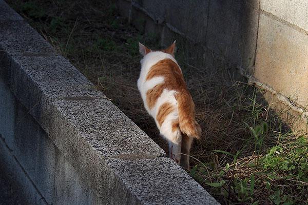 後ろ姿の茶白仔猫