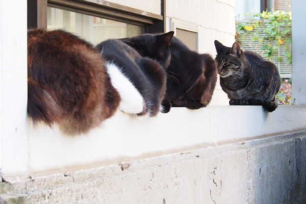 4catsonthewall
