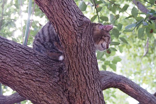 木の上のフォックス201510