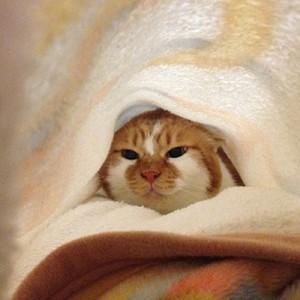毛布探検中もんち