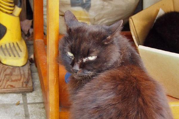 大きめの黒猫