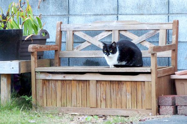 ステキなベンチにコテ