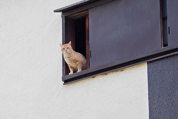 高いところから監視