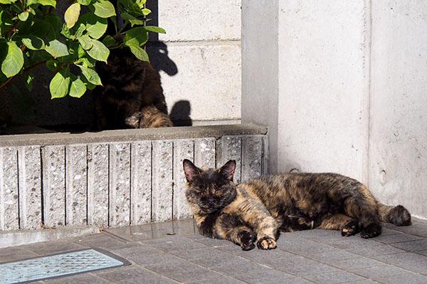 sunbathing_sabichicchi