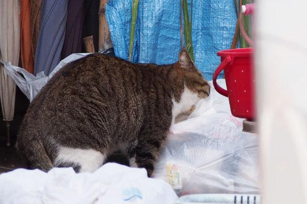 サーヤは何する猫ぞ