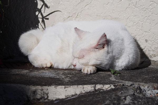 メル寝ている正面