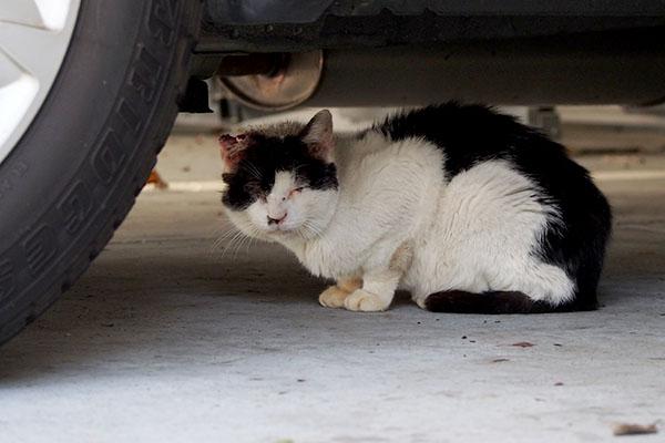 車の下に隠れるイル