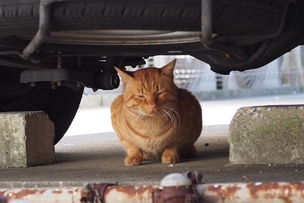 車の下でニヘラ