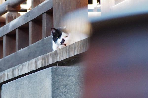 猫侍ポジション