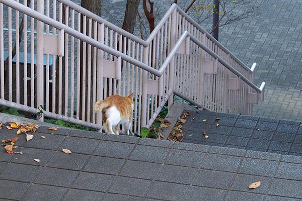 階段をどんどん降りて行く