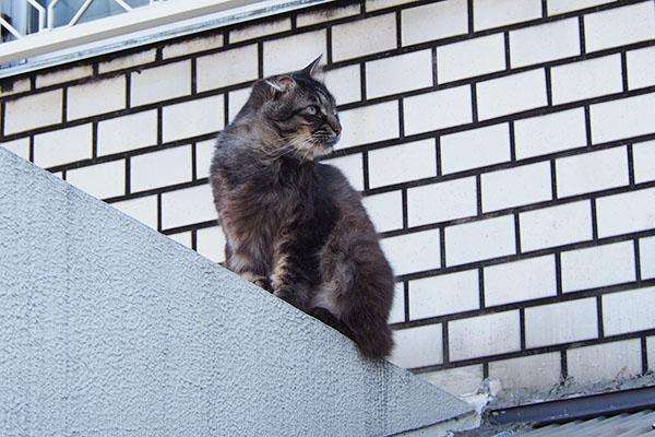 モフキジ君2階ベランダ横を向く