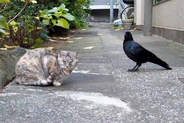 どちらもこちらを見ている