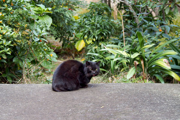 黒猫君舌ちろ