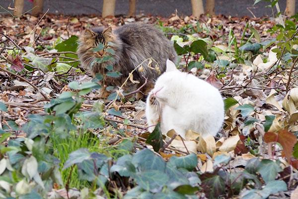 プリンの背後にもっふもっふ猫