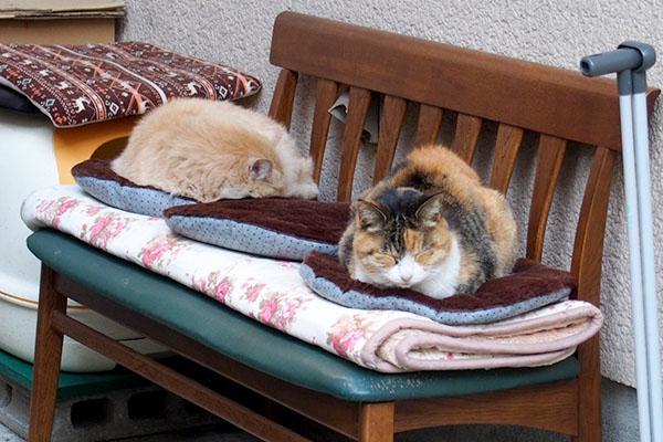 オトワとナリコマ3個寝てる