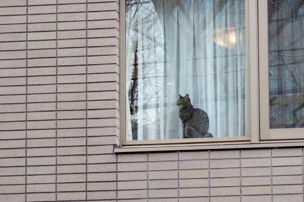 1st_windowcat