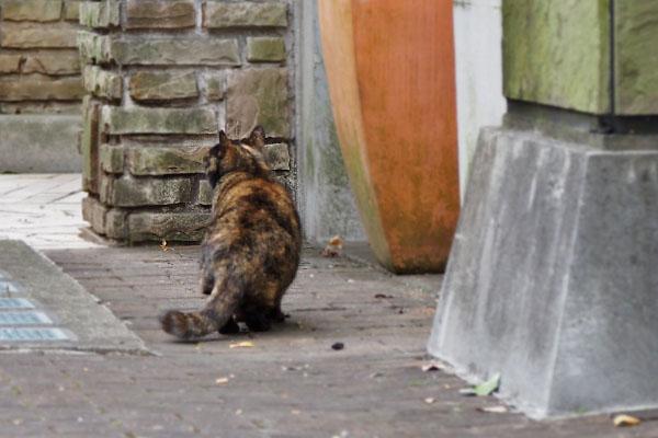 サビ猫の背中