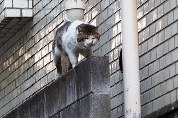 塀から降りるドンちゃん