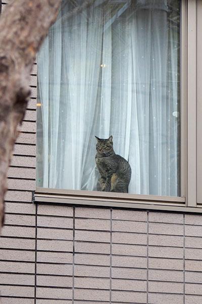 窓辺の猫さん縦