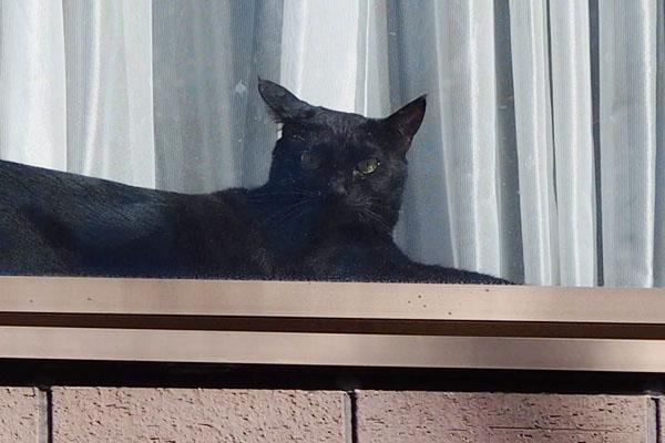 窓辺の猫黒猫さん