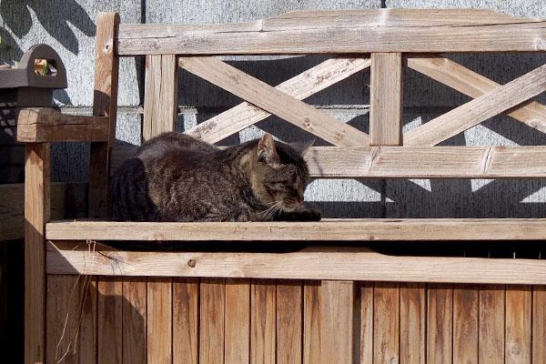 ベンチの上にキリちゃん