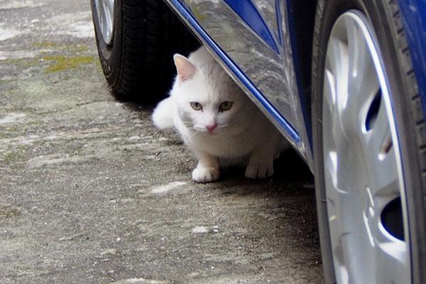 車の下にうさぎ発見