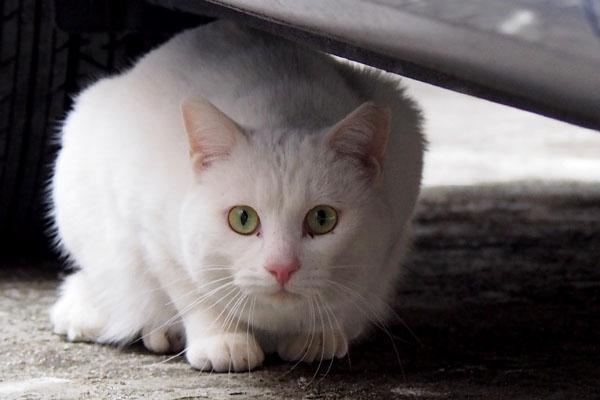 猫侍風なアップ