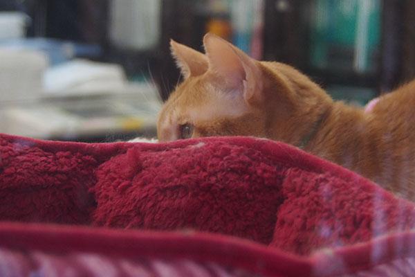 ベッドの外にチャーちゃん
