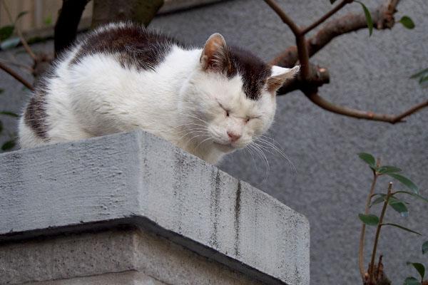 テル門の上で寝てる