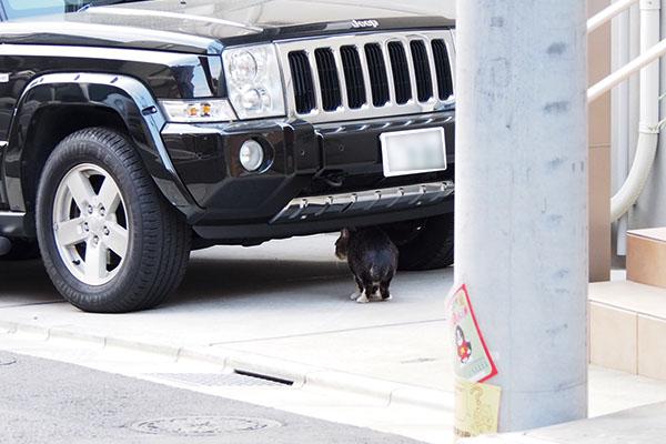 車の下に入るキャロルっち