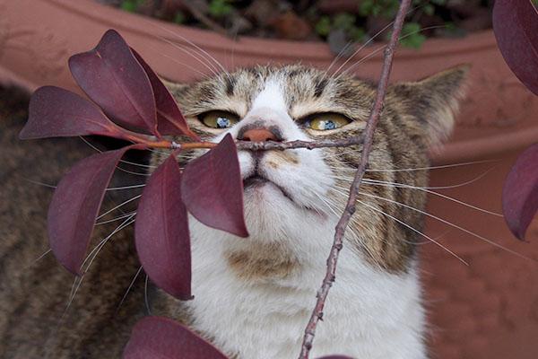 サーヤ枝を嗅ぐ