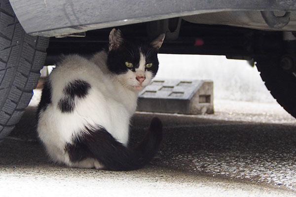 猫見知りなフク君