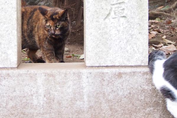 ムーンの背後に新猫サビちゃん