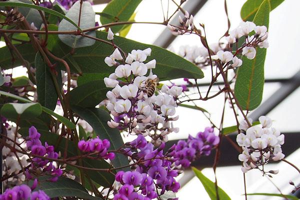 beeandflower