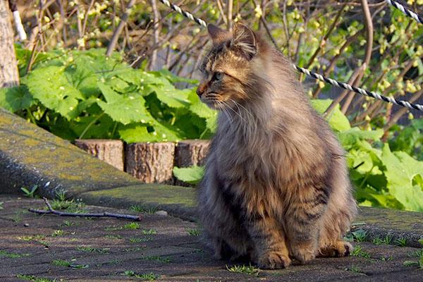 クラタンを見ているメレンゲ美猫