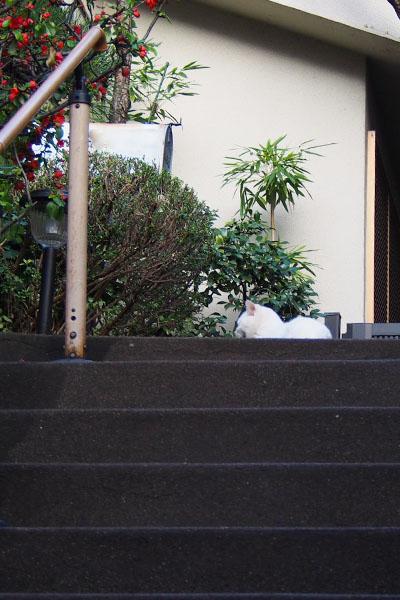階段の上にしろまる君