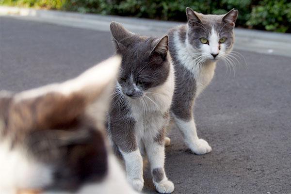 マイペースちびにゃん3cats