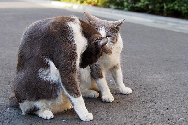 姉にゃんちびの頭の匂いチェック