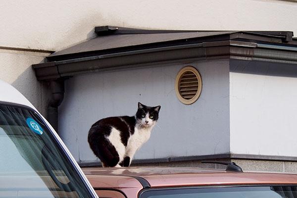 屋根に飛乗る寸前