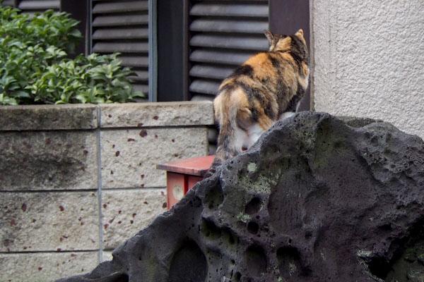 岩の上オトワ