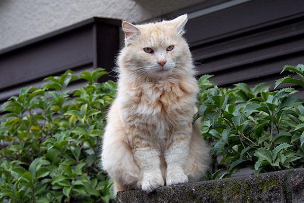 オトワを見るナリコ