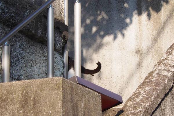階段を上がるしっぽ