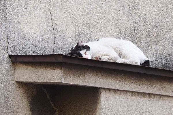庇の上寝てる坊1