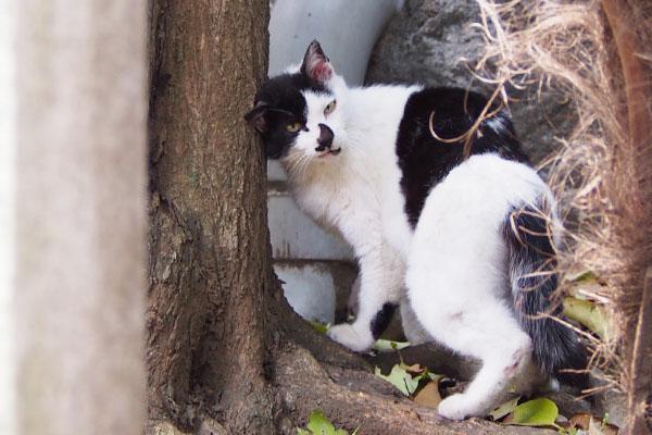 ムーン木に頭スリスリ1