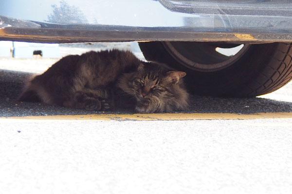 車の下のモフキジ君