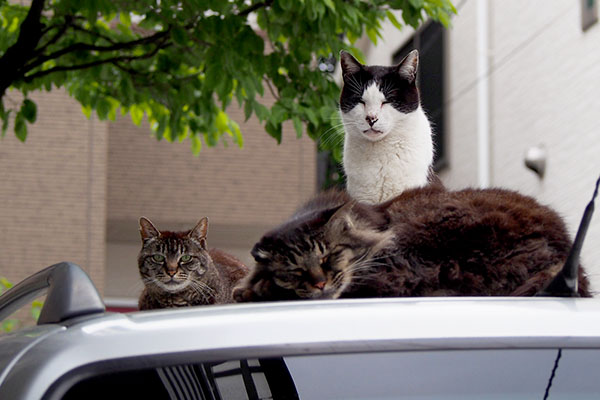 3cats on the car-roof