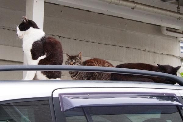 4cats_1
