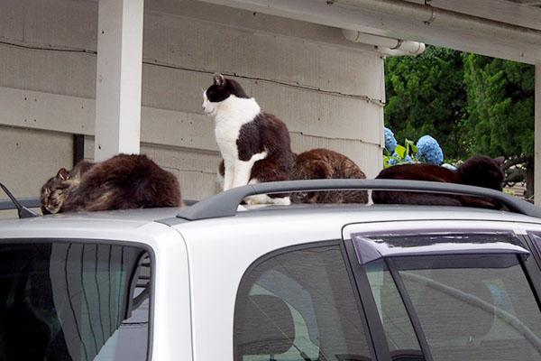 4cats_2